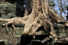 Cambodia1567_TaPhrom_FirstCourt