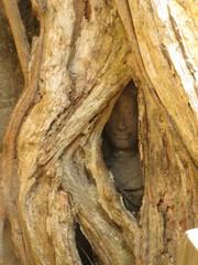 Cambodia1683_TaPhrom_InnerCourt