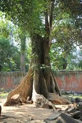 Cambodia1700_TaPhrom_InnerCourt