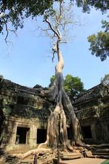 Cambodia1830_TaPhrom_LastCourt