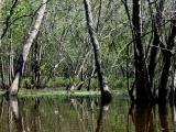 canoeing22