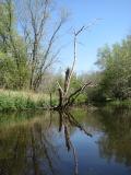 canoeing26