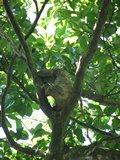 CR0810_Sloth