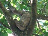 CR0812_Sloth