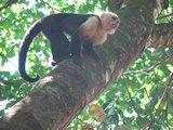 CR0815_Monkey