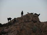 Crete0266_Falasarna_Goats