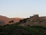 Crete0267_Falasarna_Goats