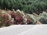Crete1047_Palaiochora_RoadTrip
