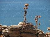 Crete1094_Palaiochora_Castle