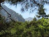 Crete1422_Samaria_RocksAndTrees