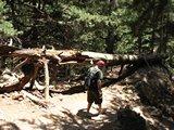Crete1430_Samaria_RocksAndTrees