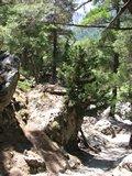 Crete1433_Samaria_RocksAndTrees