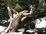 Crete1445_Samaria_RocksAndTrees