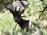 Crete1471_Samaria_InlandAgain2