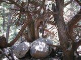 Crete1475_Samaria_InlandAgain
