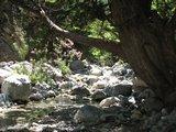Crete1481_Samaria_InlandAgain