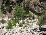 Crete1540_Samaria_DryRiverBed