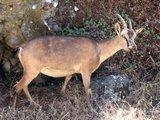 Crete1549_Samaria_DryRiverBed2