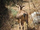 Crete1554_Samaria_DryRiverBed