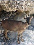 Crete1562_Samaria_DryRiverBed2