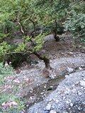 Crete1741_Samaria_RocksAndDetails