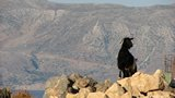 Crete2314_GoatsAndCats_Mpalos_Taverna