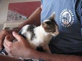 Crete2322_GoatsAndCats_Mpalos_Taverna