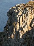 Crete2328_GoatsAndCats_Mpalos_Taverna