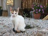 Crete2333_GoatsAndCats_Mpalos_Taverna