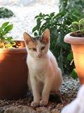 Crete2339_GoatsAndCats_Mpalos_Taverna