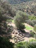 Delphi201_Fountain