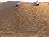AlAin051_Desert