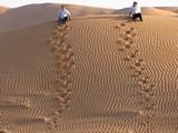 AlAin051_Desert