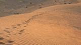 AlAin238_Desert