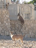 Israel0119_Negev_MitzpeRamon