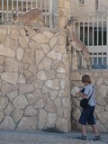 Israel0124_Negev_MitzpeRamon