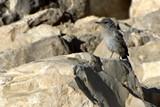 Israel0866_Masada_Birds