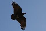 Israel0874_Masada_Birds