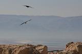 Israel0884_Masada_Birds