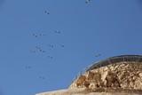 Israel0894_Masada_Birds