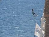 Israel1213_RedSea_KiteSurfing