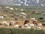 Israel3439_Galilee_Sepphoris