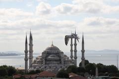 Turkey0329_Istanbul_BlueMosque