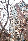 macgregortree