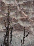 Bandelier209_ViewsOfTheValley