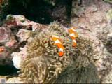Dive3_004