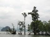 PhangNga167_LongTailBoat