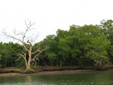 PhangNga711_Canals