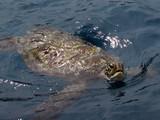 Similan222_TurtleRock