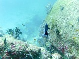Similan403_ElephantHeadRockDive